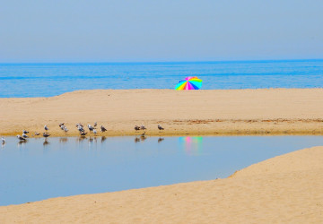 colourful umbrella and birds on the beach